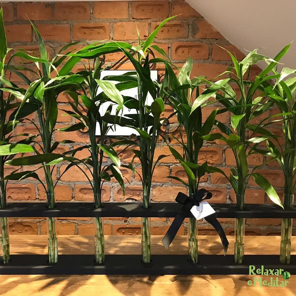 Suporte em Madeira com 21 Hastes de Bambu da Sorte com Vasos em Vidro