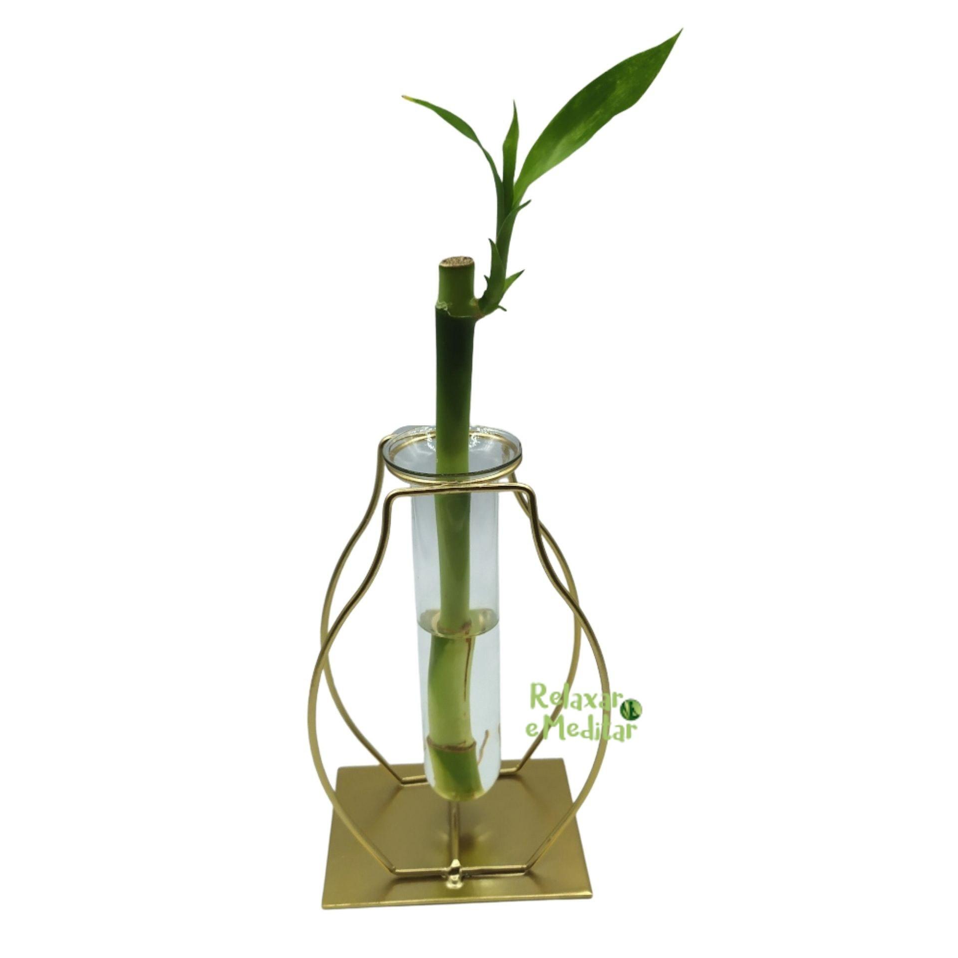Suporte em Metal e Vaso de Vidro com Bambu da Sorte (Pêra)