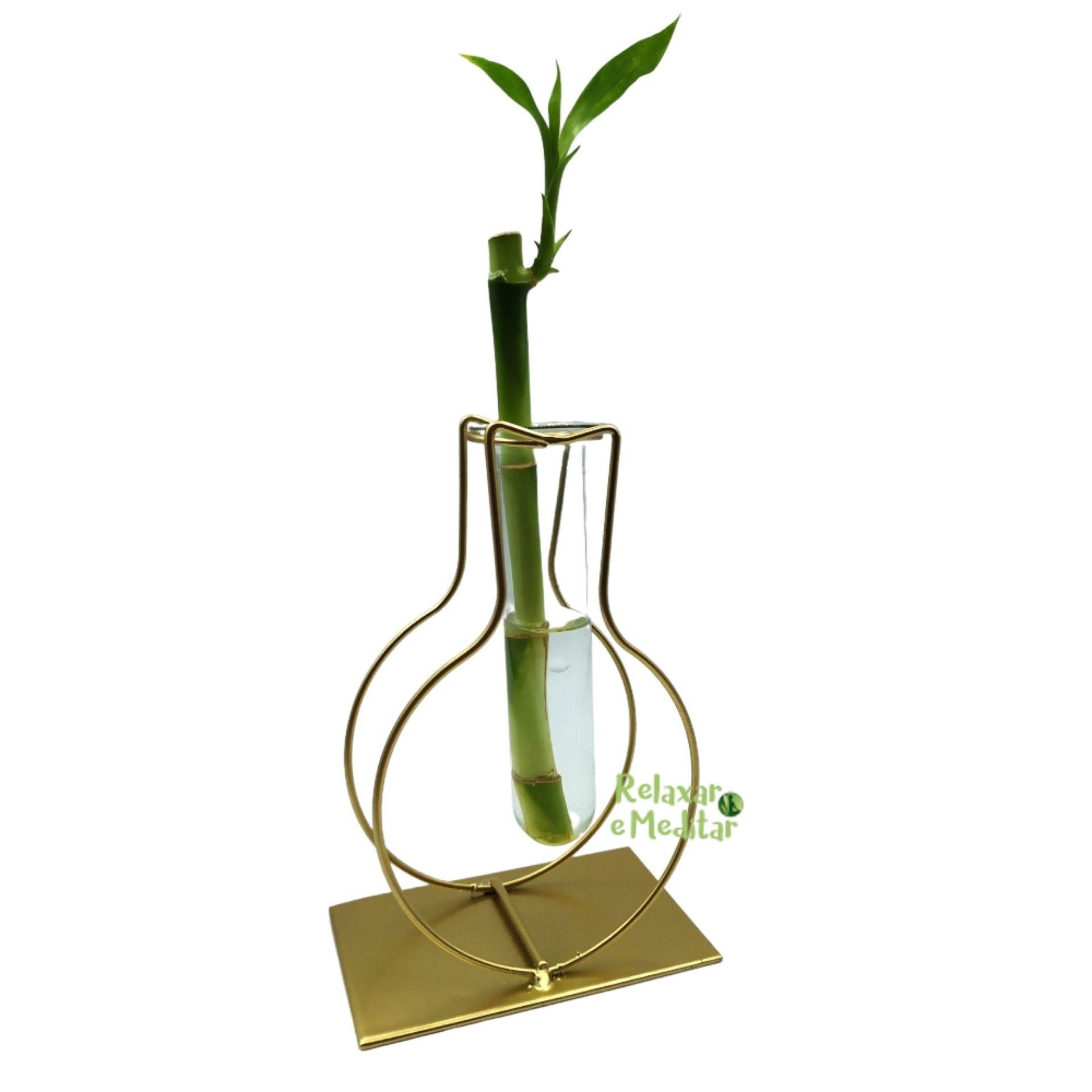 Suporte em Metal e Vaso de Vidro com Bambu da Sorte (Vaso)