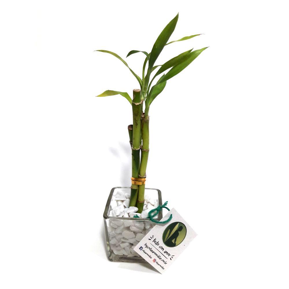 Vasinho de Vidro com Três Bambu da Sorte (Pequeno)
