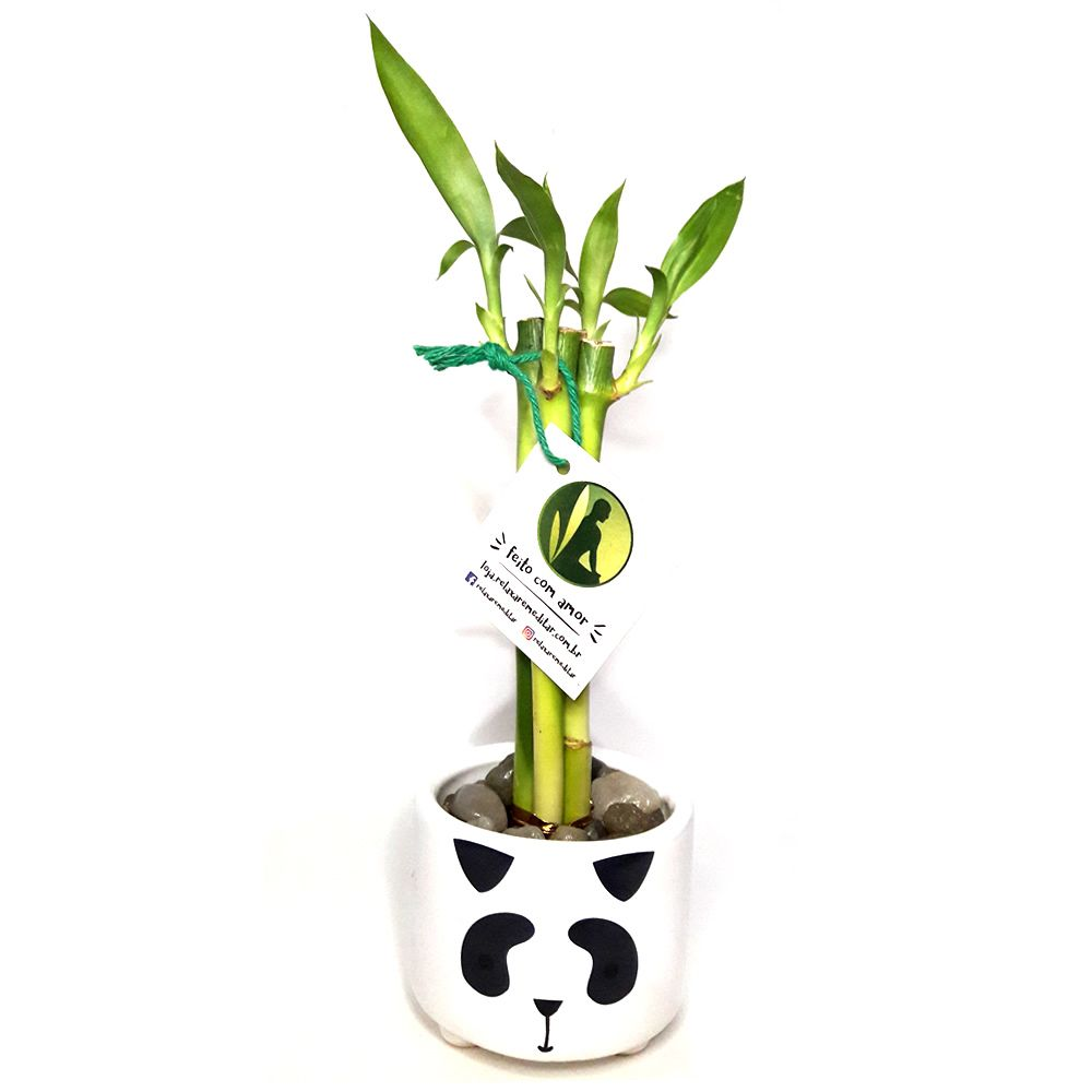 Vasinho Panda Redondo com Três Bambus da Sorte (Sucesso Profissional)