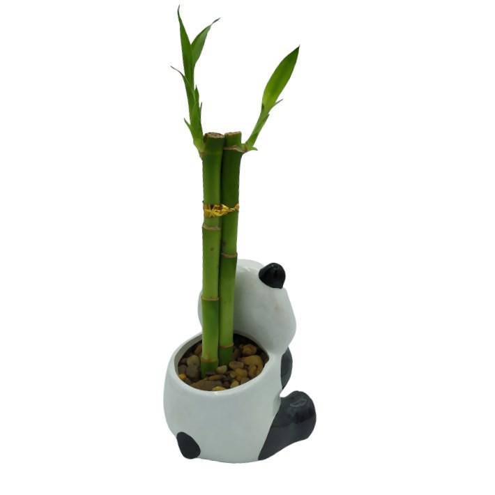 Vasinho Panda Sentado com Três Bambus da Sorte