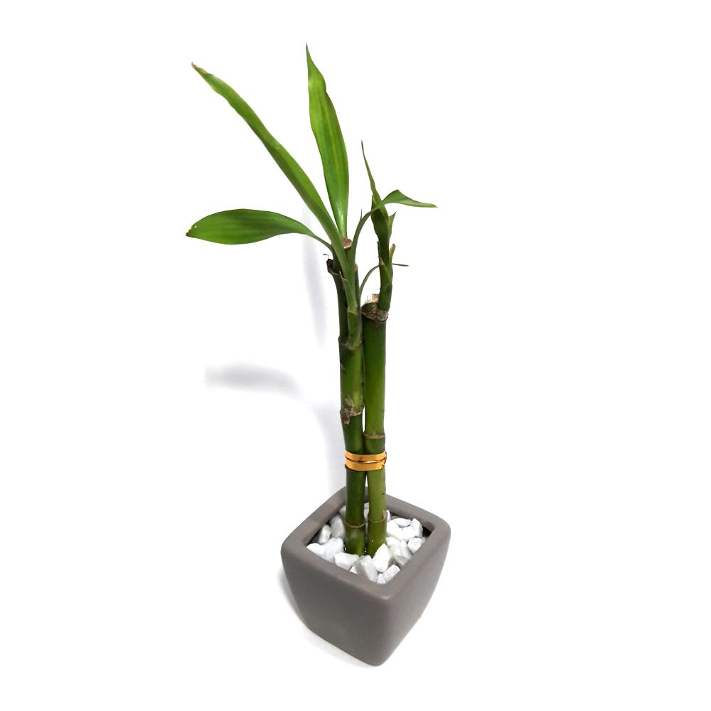 Vasinho Quadrado com Dois Bambus da Sorte (Cinza)