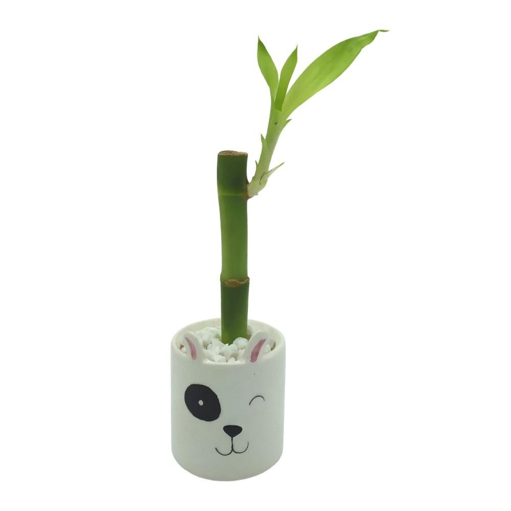 Vasinho Redondo com Bambu da Sorte (Dog)