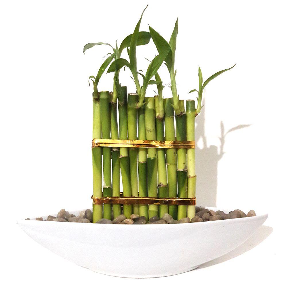 Vaso Canoa em Cerâmica com Onze Bambus da Sorte e Cascalho de Rio (Branco)