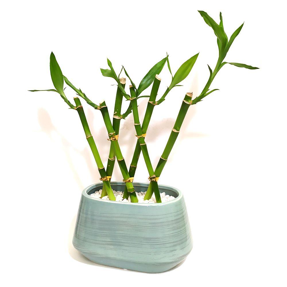 Vaso Cerâmica com Seis Hastes de Bambu da Sorte