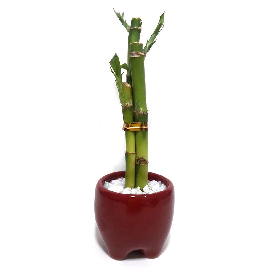 Vaso em Cerâmica com Três Bambus da Sorte (Lucky Bamboo)