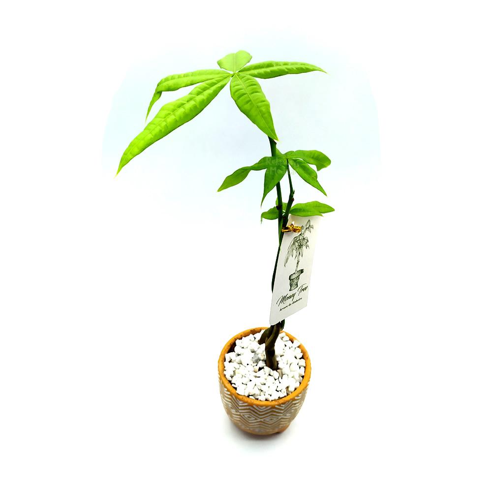 Vaso em Cerâmica Tupi com Árvore do Dinheiro (Pequena)
