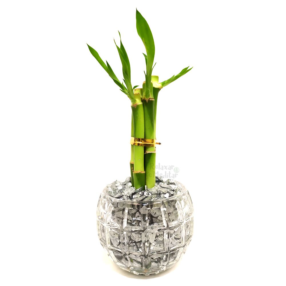 Vaso Redondo com Cinco Hastes de Bambu da Sorte (Energia da Lua)