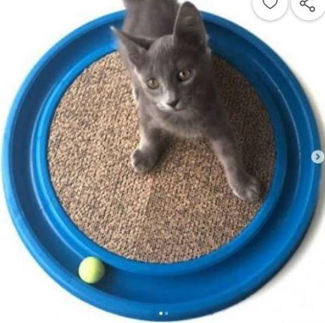 Brinquedos Cat Play catplay JOGO para gatos Arranhador Anti Stress Para Gato Deixe seu gatinho feliz Gato.