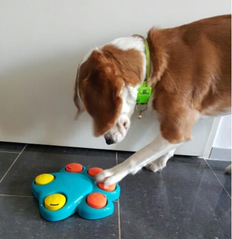 Quebra Cabeça formato de Pata - Brinquedo Interativo