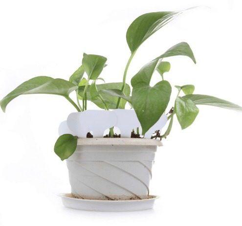 Kit Com 10 Placas De Identificação Para Hortas E Floreiras