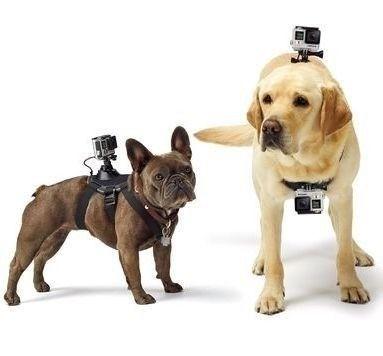 Cinturão Canino Fetch Dog Suporte Cachorro Gopro