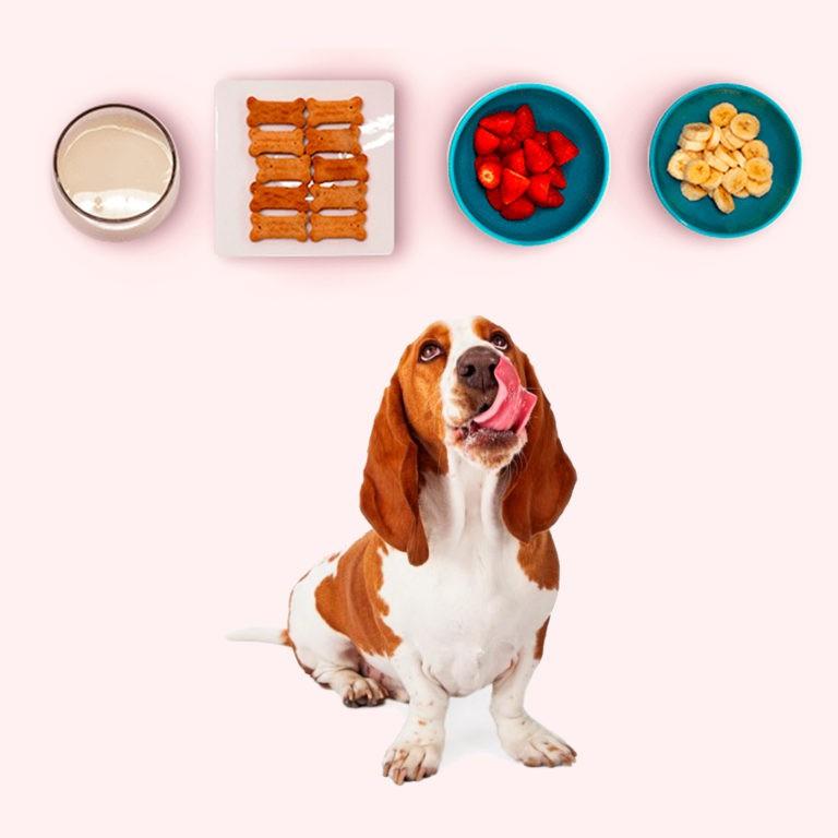 eBook Alimentação Caseira para Cães Saudáveis