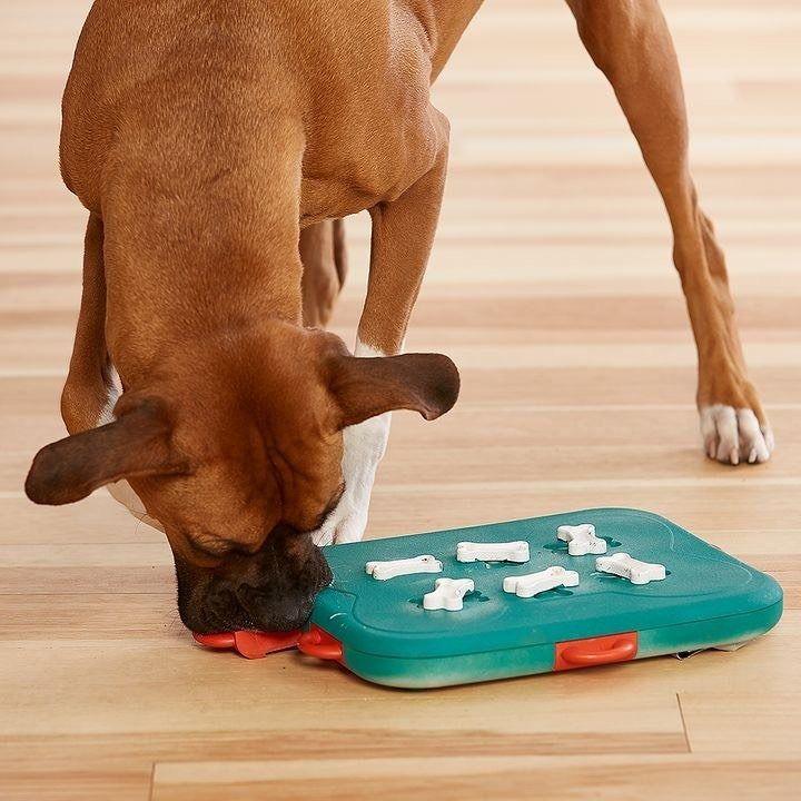 Dog Casino Jogo Inteligente Para Cães