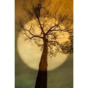 Árvore Circular