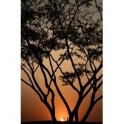 Árvore Solar