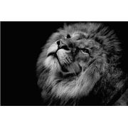 Tela Canvas Black and White Lion