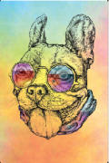 Tela Canvas Bulldog Collor