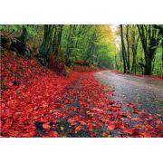 Caminho Flores Vermelhas