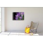 Quadros - Dek House - Natureza Flores - Telas Decorativas - Decoração De Ambientes