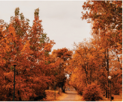 Tela Canvas Árvores de Outono