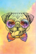 Tela Canvas Color Pug
