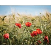 Tela Canvas Flor Campo Vermelha
