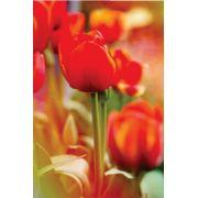 Tela Canvas Tulipa