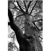 Tree Black and White