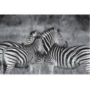 Tela Canvas Zebra