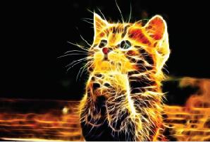 Tela Canvas  Abstract Cat 2