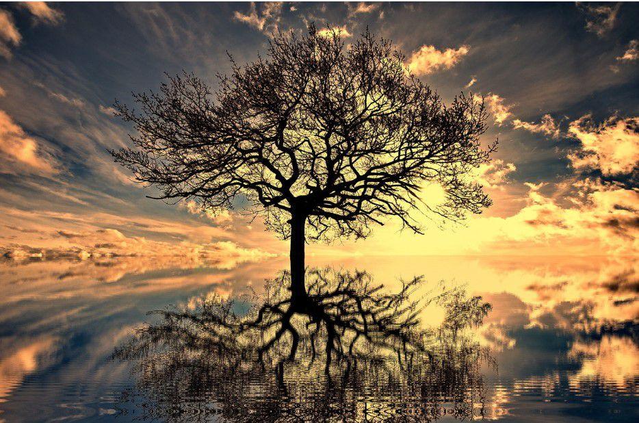 Árvore Galhos Secos