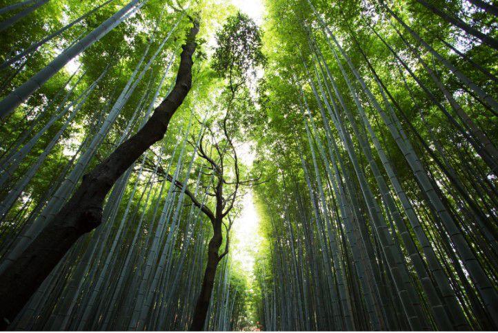 Composição Forest