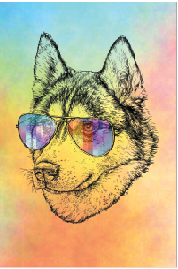 Tela Canvas  Dog Color 3