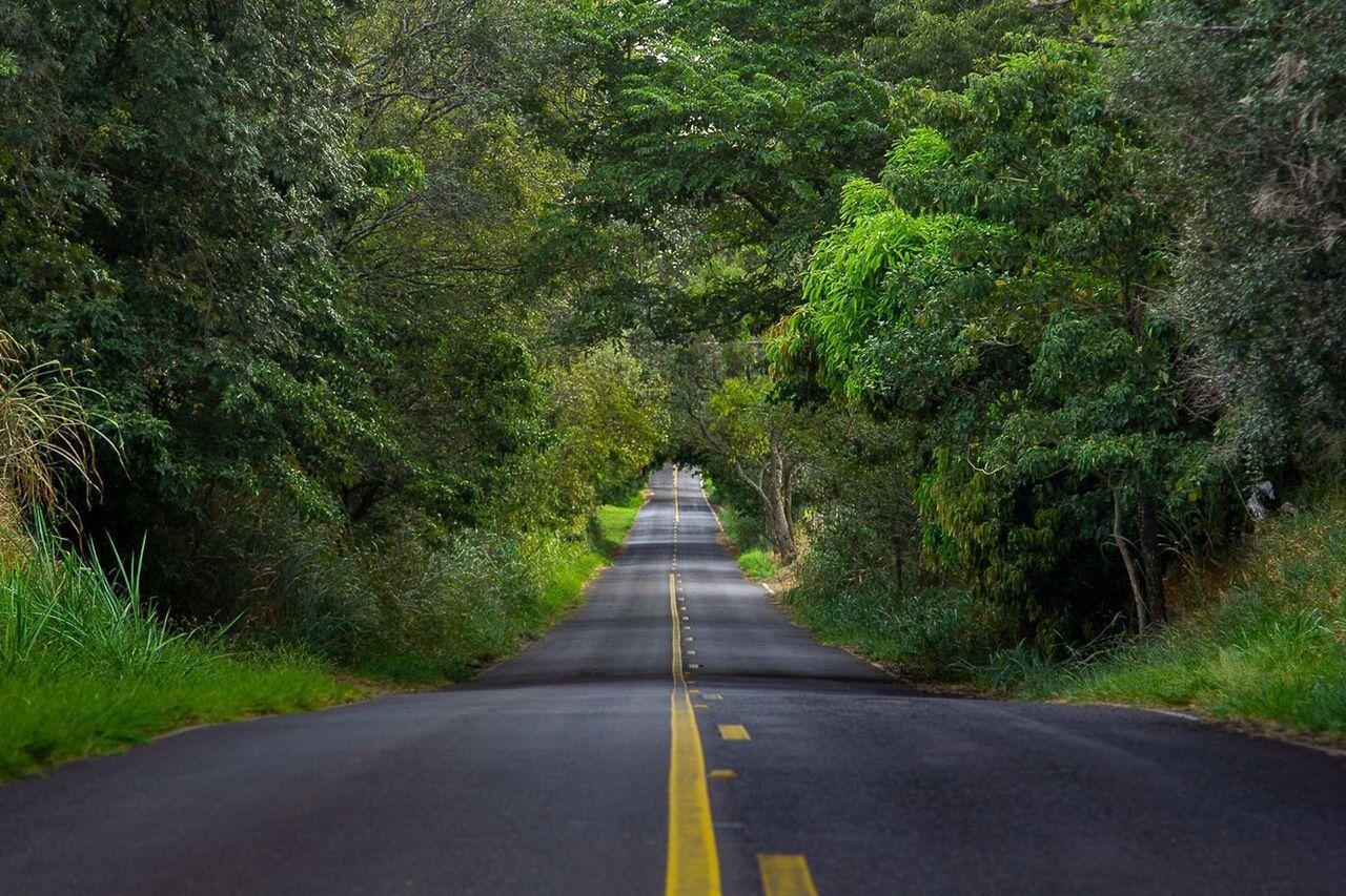 Tela Estrada Verde