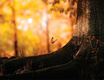 Tela Canvas Árvore Raiz