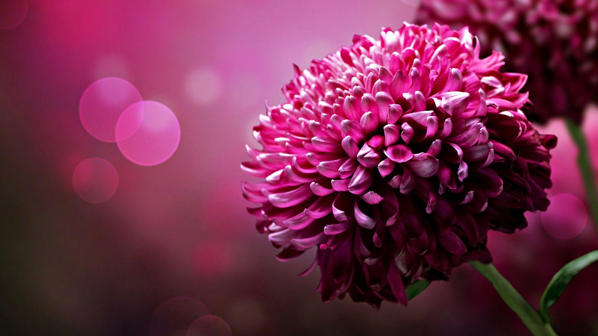 Tela Canvas Flor Rosa