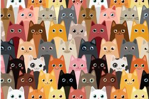 Tela Canvas Litle Cats