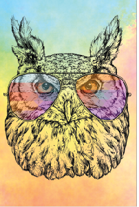 Tela Canvas Owl Color 2