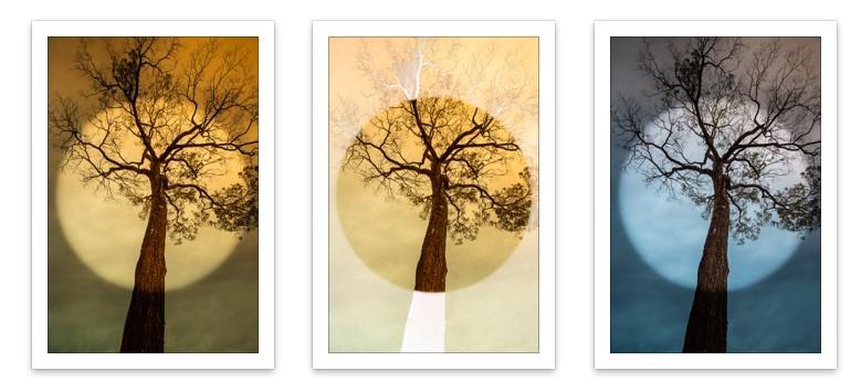 Tríptico Árvore Circular