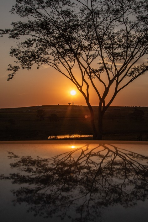 Tríptico Árvore Solar