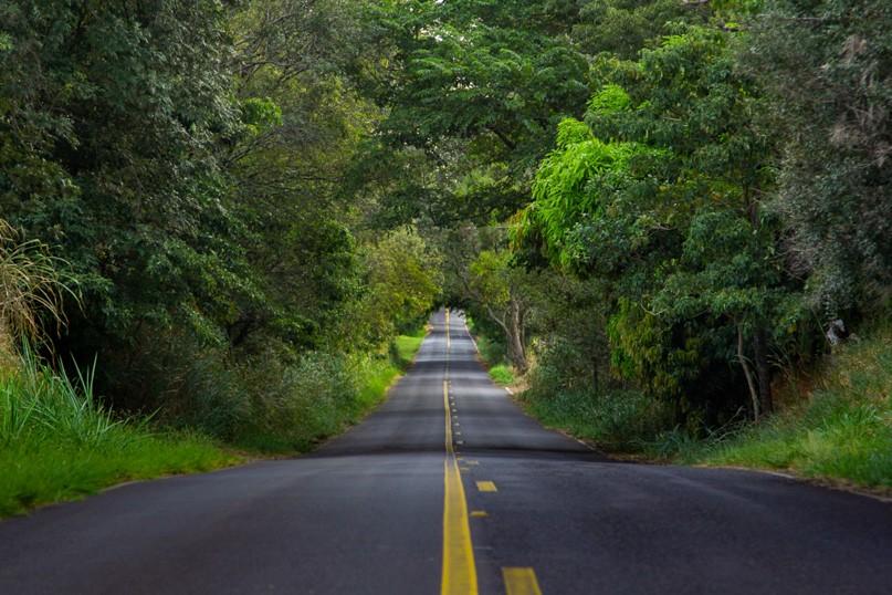 Tríptico Estradas Verdes