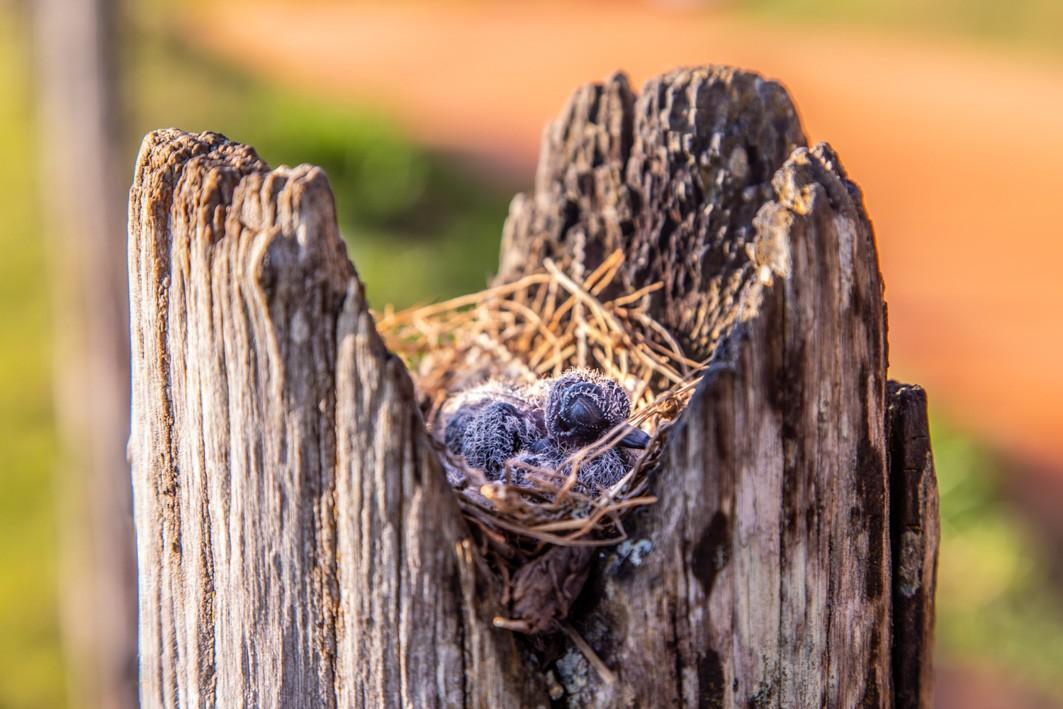 Tríptico Pássaro Parapente Vista Marília
