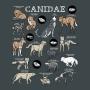 Camiseta Baby Look Canidae