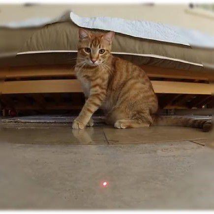 Brinquedo Laser CatMyPet Patinha Cat Light