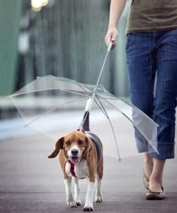 Guarda Chuva para Cães The Pets Brasil Transparente