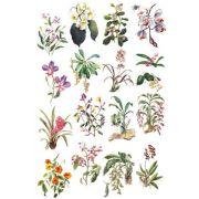 Decalque para Porcelana - Coleção Orquídeas 1