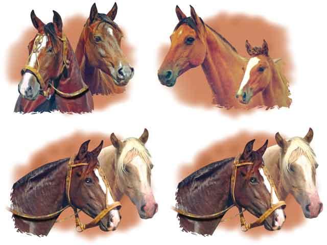 Decalque para Porcelana - Cabeças de Cavalo - Com 2