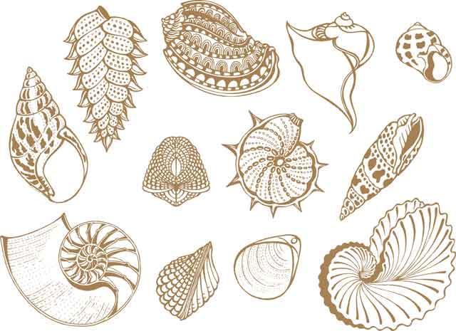 Decalque para Porcelana - Conchas